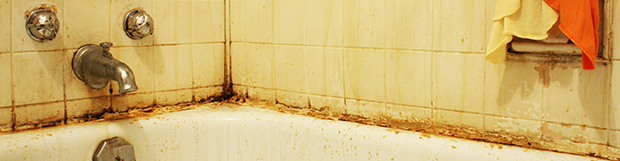 Mold and Mildew Solutions