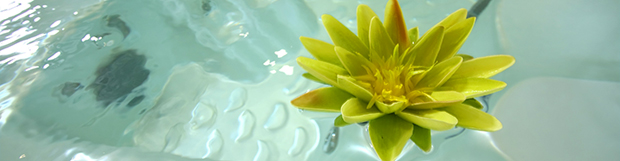 The Environmentally Friendly Bathtub Refinishing Solution